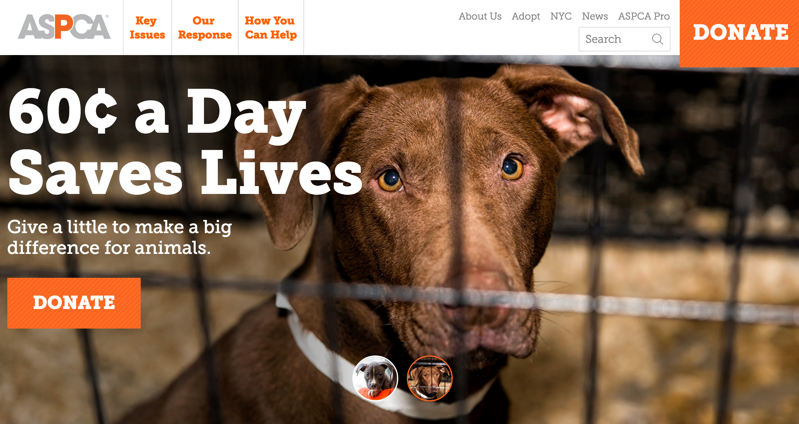 The ASPCA: Website Redesign Example